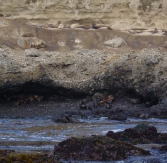 Sea lions and elephant seals on Santa Barbara Island.